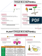 DG5-Plant-Cycle-in-a-Nutshell-l1d.pdf
