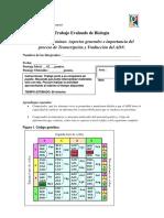 Trabajo Evaluado de Biología trans y traduccion ADN 2015 final.docx