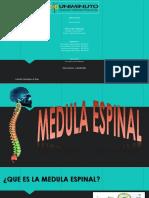 Diapositiva Medula Espinal (1)