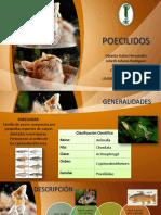 acuaristica.pptx