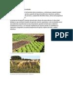 Pérdida de Biodiversidad Agraria