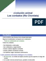 Animales Cordados-filo Chordata