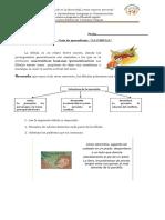 Guia Fabula.docx