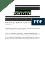 Document_(1)oignons[1]
