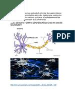 Blog Neurona y Glia