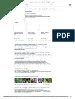 Argyreia Consumo Remover Toxinas - Pesquisa Google