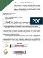 Sistema Muscular 2019-2