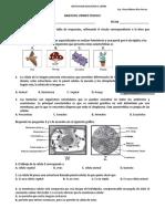 6 Biologia bimestral.doc
