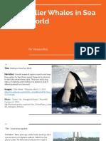 killer whales in sea world  1
