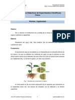 f20-plantas-capilaridad