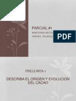 Origen y Evolucion Del Cacao