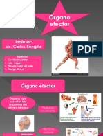 Organo Efector LESLICITA.pptx