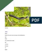 milipede