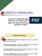 gENETICA MENDELINA (2)