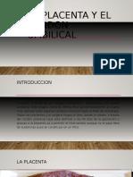 La Placenta y El Cordon Umbilical