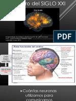 Cerebro Siglo 21