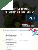 MICRORGANISMOS EN HORTALIZAS.pptx