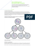 Diversification Genetique Et Diversification d
