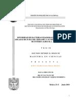 33 (1).pdf