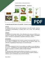 La Historia de Las Verduras