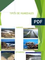 Tipos de humedales en geomorfología