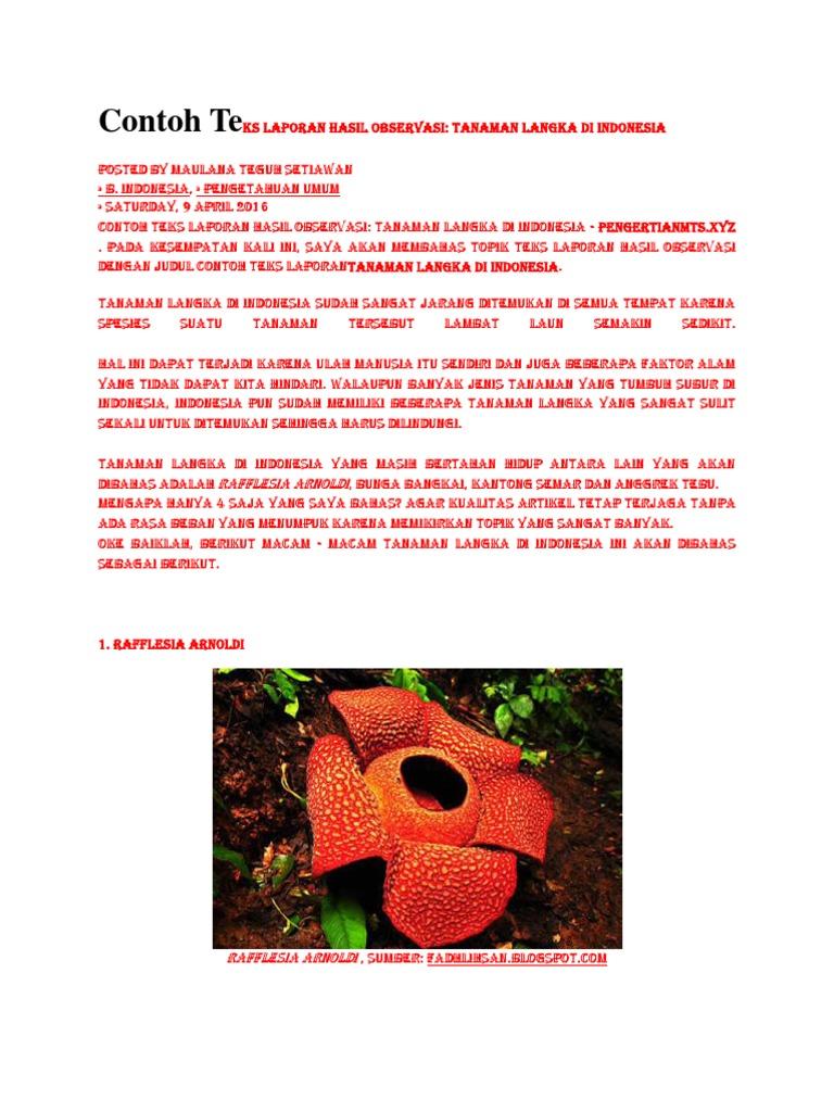 Contoh Teks Laporan Hasil Observasi Tentang Bunga Anggrek Berbagai Teks Penting