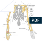 Test de Anatomia