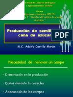 03Produccionsemilla (1)