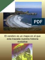 Neuroanatomia1.pdf
