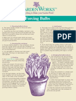 Bulbs - Forcing Bulbs