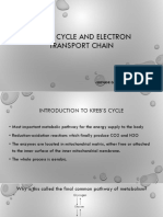 Kreb's Cycle and ETC