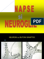 A04 Sinapse Si Nevroglie