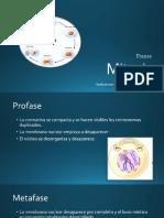 Mitosis.pptx
