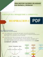 7. Respiracion Celular