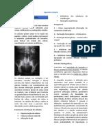 Aparelho_urinário