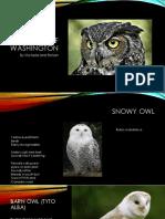 owls of washington  3