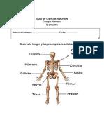 Guía de Ciencias Naturales Cuerpo Humano