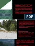 ecosistemas de la selva tropical(Varillal-Pacal)