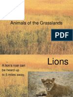 Animals of the Grasslands