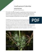 Especies colombianas de Cannabis