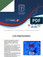 Ribosomas, Biología Celular