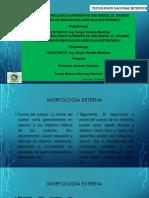 Presentación de La Morfologia de Los Insectos