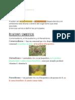 Infectologia.docx