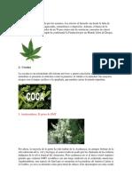 10 Tipos de Droga
