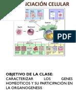 211989891 Resumen PSU Biologia PDV