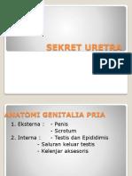 186918684-Sekret-Uretra-Kel-2.pptx
