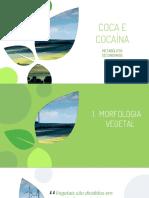 Coca e Cocaína