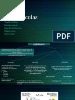 Biomoleculas (1).pdf