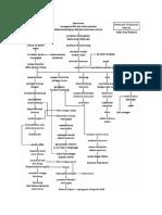 Thalassemia Pathways