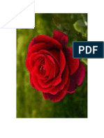 Rosa Pablo